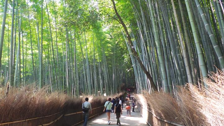 Arashiyama_Bamboo Grove