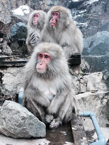 yamanouchi-snow-monkey-family-2016