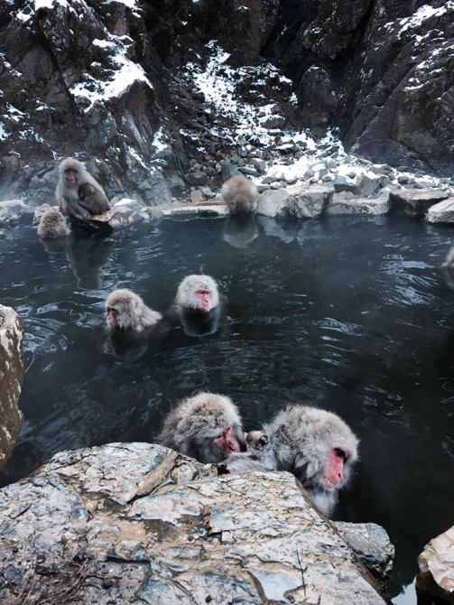 yamanouchi-snow-monkeys-in-onsen-2016